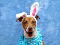 OCAS March 25, 2015 Shelter Dog Photos
