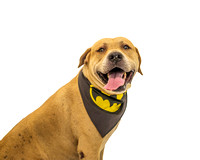 OCAS May 3, 2015 Shelter Dog Photos