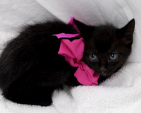 OCAS May 6, 2015 Shelter Cat Photos
