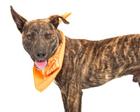 OCAS May 10, 2015 Shelter Dog Photos
