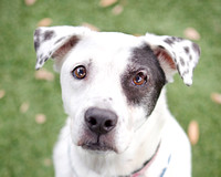 OCAS May 13, 2015 Shelter Dog Photos