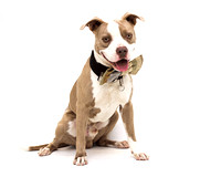 OCAS May 17, 2015 Shelter Dog Photos