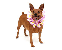 OCAS May 20, 2015 Shelter Dog Photos