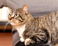 OCAS May 24, 2015 Shelter Cat Photos