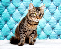 October 28, 2012 Shelter Cat Photos