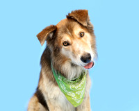 OCAS September 9, 2015 Shelter Dog Photos