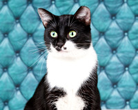 OCAS December 21, 2014 Shelter Cat Photos