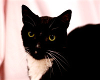 OCAS April 17, 2016 Shelter Cat Photos