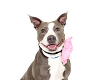 OCAS April 10, 2016 Shelter Dog Photos