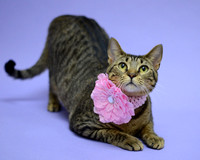 OCAS April 5, 2016 Shelter Cat Photos