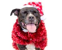 OCAS December 14, 2014 Shelter Dog Photos