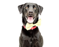 OCAS December 21, 2014 Shelter Dog Photos