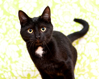 OCAS March 8, 2015 Shelter Cat Photos