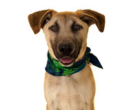 OCAS March 30, 2014 Shelter Dog Photos