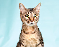 OCAS March 23, 2014 Shelter Cat Photos