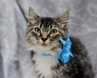 OCAS December 28, 2014 Shelter Cat Photos