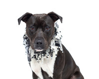 OCAS April 13, 2016 Shelter Dog Photos