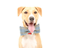 OCAS August 10, 2014 Shelter Dog Photos