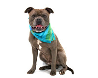 OCAS March 22, 2015 Shelter Dog Photos