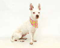 OCAS August 27, 2014 Shelter Dog Photos