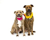 OCAS March 1, 2015 Shelter Dog Photos