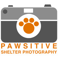 OCAS March 23, 2017 Shelter Cat Photos