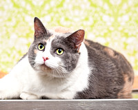 July 28, 2013 Shelter Cat Photos